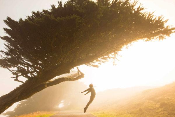 lancement-arbre