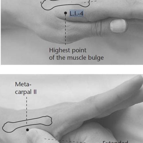 point acupuncture li 4
